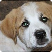 Adopt A Pet :: Lady -Adopted - Oklahoma City, OK