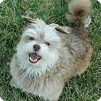 Adopt A Pet :: BRETT - Mission Viejo, CA