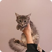 Adopt A Pet :: Polly - Maywood, NJ