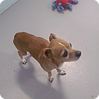 Adopt A Pet :: Peanut - Muskegon, MI