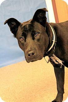 Labrador Retriever Mix Dog for adoption in Brookhaven, New York - Edgar