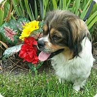 Adopt A Pet :: Mona Lisa - Sugarland, TX