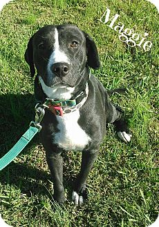 Labrador Retriever Mix Dog for adoption in Lawrenceburg, Tennessee - Maggie