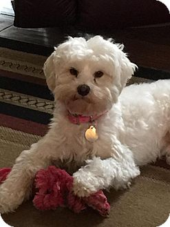 Terrier (Unknown Type, Small) Mix Dog for adoption in San Diego, California - Maura