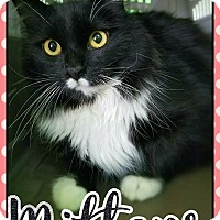 Adopt A Pet :: Mittens - Edwards AFB, CA