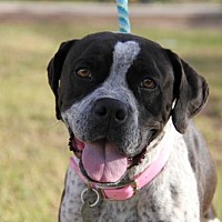 Adopt A Pet :: Li'l Momma - Phoenix, AZ