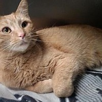 Adopt A Pet :: Pauly - Ashtabula, OH