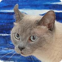 Adopt A Pet :: Kubo - Englewood, FL