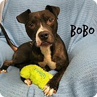 Adopt A Pet :: Bobo - Melbourne, KY