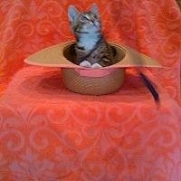 Adopt A Pet :: Whirley Bird - Tampa, FL