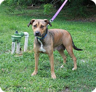Shepherd (Unknown Type) Mix Dog for adoption in Boca Raton, Florida - Sadie