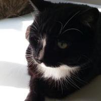 Adopt A Pet :: Midnight - Winona, MN