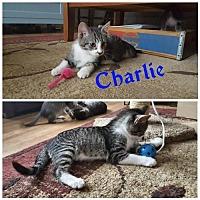 Adopt A Pet :: Charlie - Crestview, FL