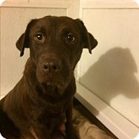 Adopt A Pet :: missy - North Myrtle Beach, SC