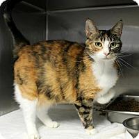 Adopt A Pet :: Betty - Hilton Head, SC