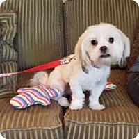 Adopt A Pet :: Willey - Washington, DC