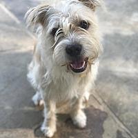 Adopt A Pet :: Rafiki - New York, NY