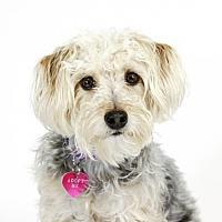 Adopt A Pet :: Gracie - St. Louis Park, MN