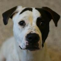 Adopt A Pet :: Rory - Aiken, SC
