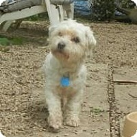 Adopt A Pet :: Brady ADOPTED!! - Antioch, IL