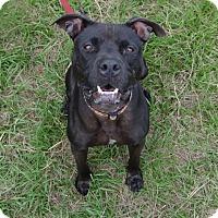 Adopt A Pet :: Vader - Jupiter, FL