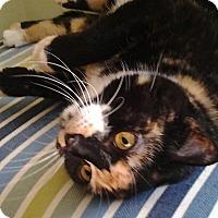 Adopt A Pet :: Bailey - Muncie, IN