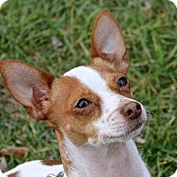 Adopt A Pet :: Hunter - Winters, CA