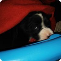 Adopt A Pet :: Jolly(pending) - Treton, ON