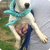 Adopt A Pet :: SPARKY - Pilot Point, TX
