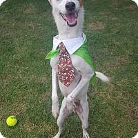 Adopt A Pet :: Jogui - Freeport, ME