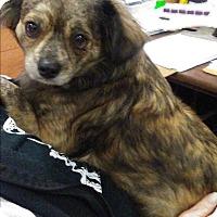 Adopt A Pet :: Romeo - Okmulgee, OK