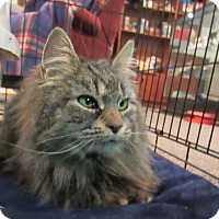 Adopt A Pet :: Spring - Norwich, NY