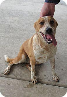 Australian Cattle Dog Mix Dog for adoption in Sierra Vista, Arizona - Mazie