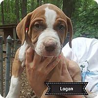 Adopt A Pet :: Logan - Louisville, KY