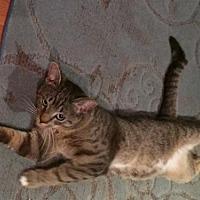 Adopt A Pet :: Alex - Philadelphia, PA