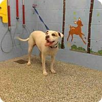 Adopt A Pet :: A504521 - San Bernardino, CA