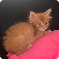 Adopt A Pet :: Toby 7 - Austin, TX