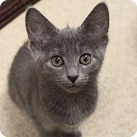 Adopt A Pet :: Bunny - Naperville, IL