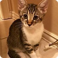 Adopt A Pet :: Linus - Dallas, TX