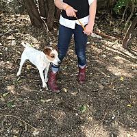 Adopt A Pet :: Gunner - East Hartford, CT