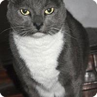 Adopt A Pet :: Sybil - La Canada Flintridge, CA