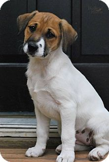 Terrier (Unknown Type, Medium) Mix Puppy for adoption in Baton Rouge, Louisiana - Babs