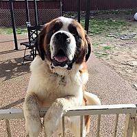 Adopt A Pet :: Texas - McKinney, TX