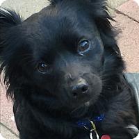 Adopt A Pet :: Hamilton - VIDEO! - Los Angeles, CA