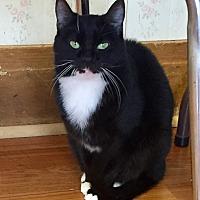Adopt A Pet :: Cora - Greensburg, PA