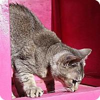 Adopt A Pet :: Smokey - Ocala, FL