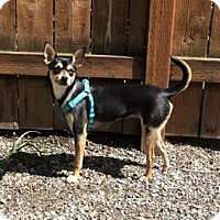 Adopt A Pet :: Mandy - Seattle, WA