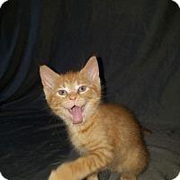 Adopt A Pet :: Zaria - ROSENBERG, TX