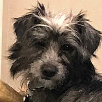 Adopt A Pet :: Zelda - Kirkland, WA