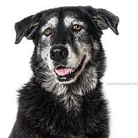 Adopt A Pet :: Rosie - Pearland, TX
